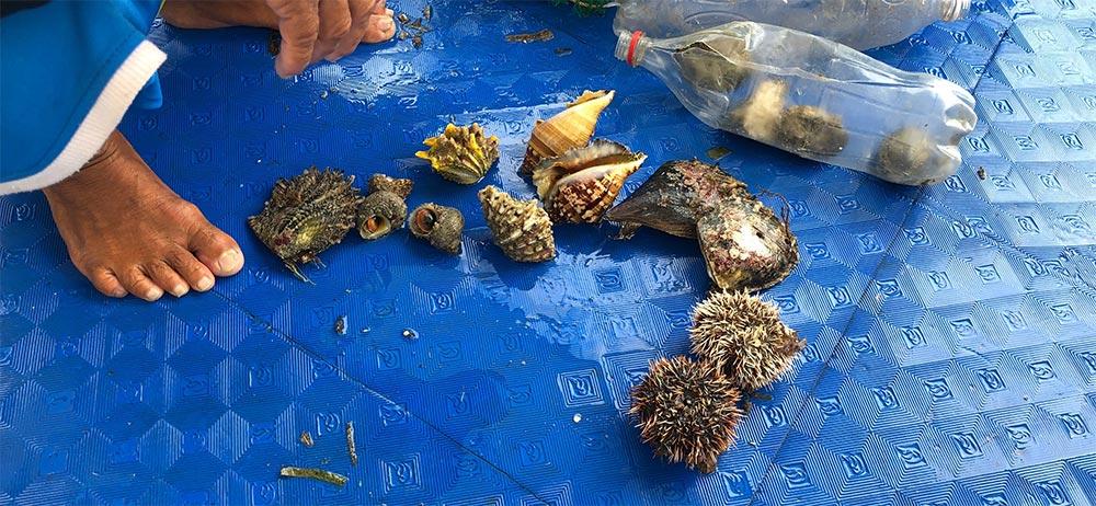 購入した貝たち