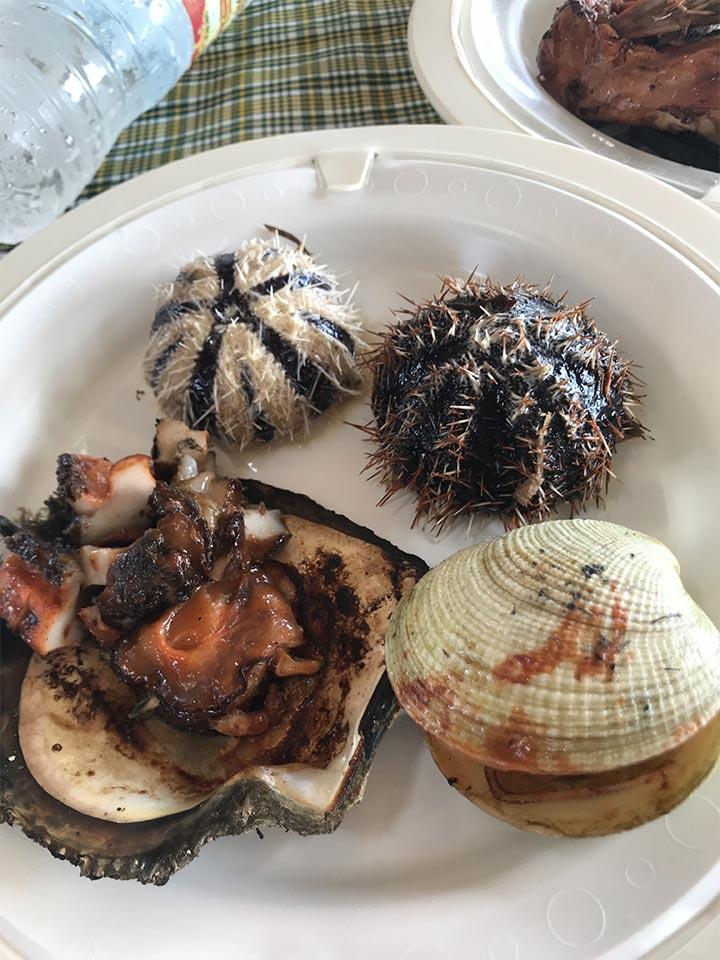 ヒルトゥガン島の現地民の方から買った貝たち
