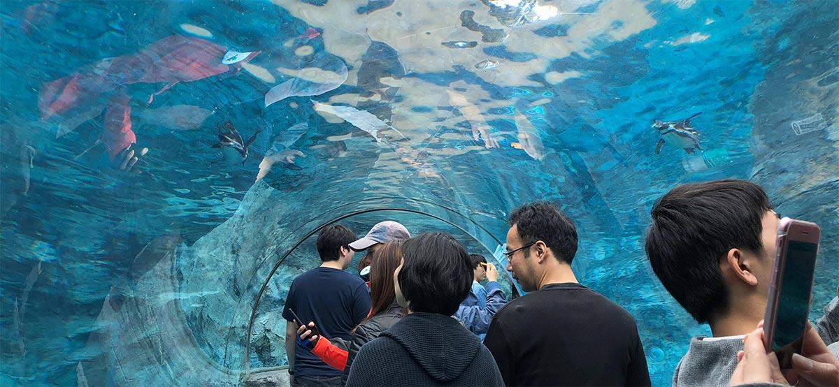「ぺんきん館」の水中トンネル
