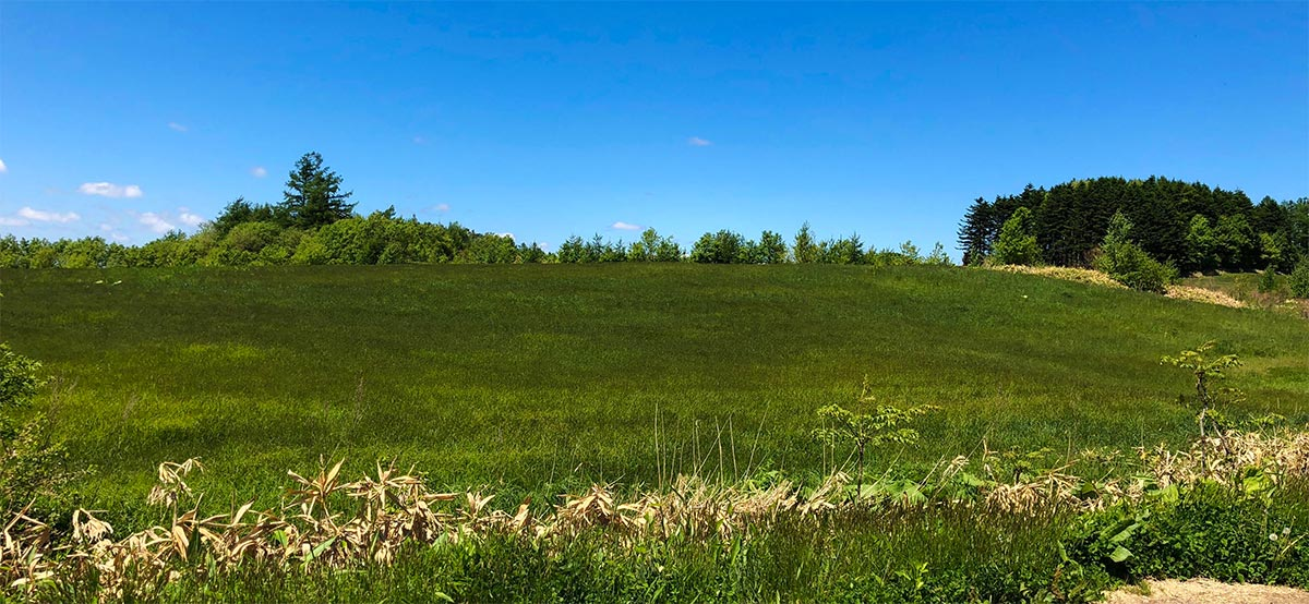 風になびく草原