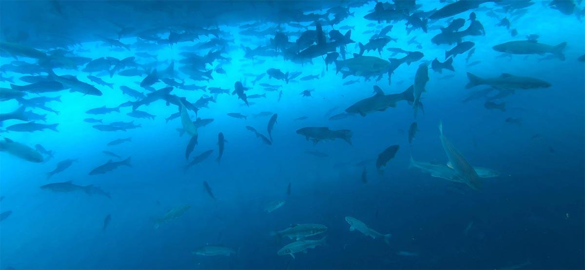 船底の窓から見える魚たち